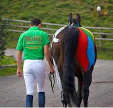 Alps Equestrian Centre Demo
